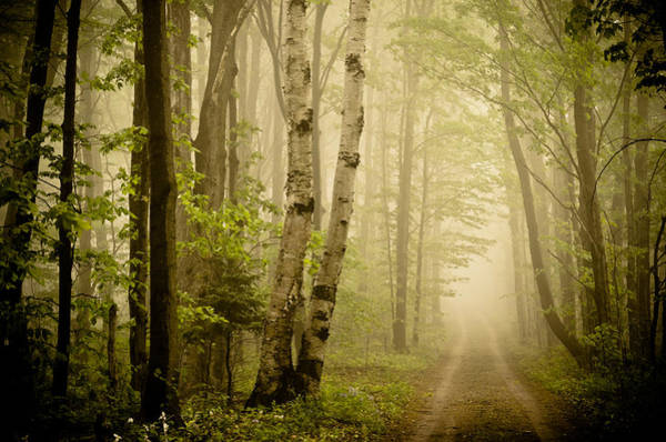 Chartreuse Photograph - The Road Through The Woods by Olivia StClaire