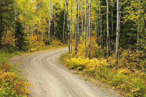 Boundary County Photograph - The Road To Bob Bay by Adam Pender