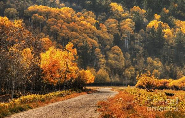Photograph - The Road To Gold by Anthony Wilkening