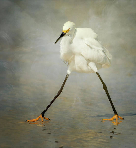 Egret Photograph - The Rock Star by Alfred Forns