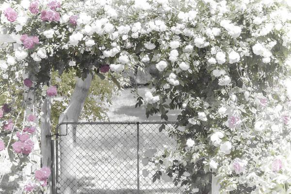 Photograph - The Rose Arbor by Elaine Teague