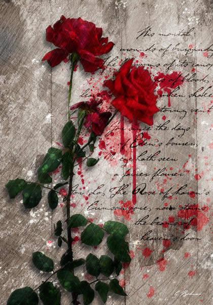 Rose Flower Digital Art - The Rose Of Sharon by Gary Bodnar