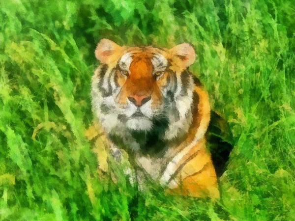 Mangroves Digital Art - The Royal Bengal Tiger by Maciek Froncisz