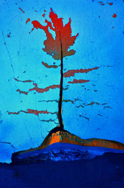 Photograph - The Rust Tree by Tara Turner