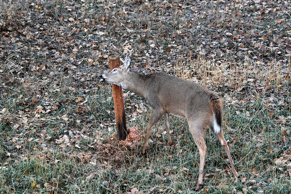 Photograph - The Rut by Shane Bechler