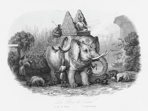 The Specials Drawing - The Sacred Elephant Of The King Of Siam by Mary Evans Picture Library
