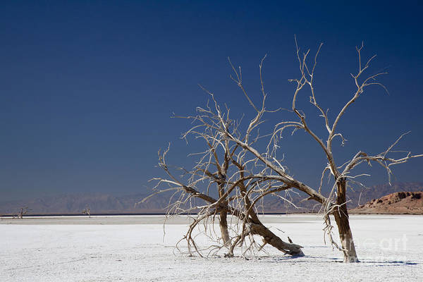 Sonny Bono Wall Art - Photograph - The Salton Sea by Jim West