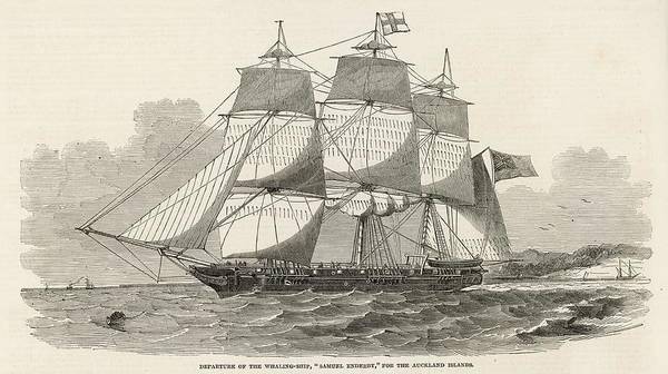 Wall Art - Drawing - The 'samuel Enderby', A  Whaling Ship by  Illustrated London News Ltd/Mar
