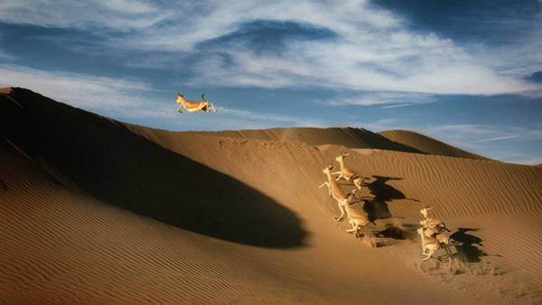 Wall Art - Photograph - The Sand Gazelle. by Wael Onsy