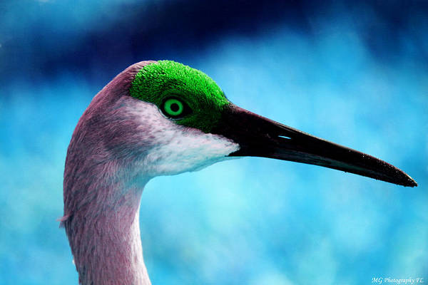 Photograph - The Sandhilll Crane  by Marty Gayler