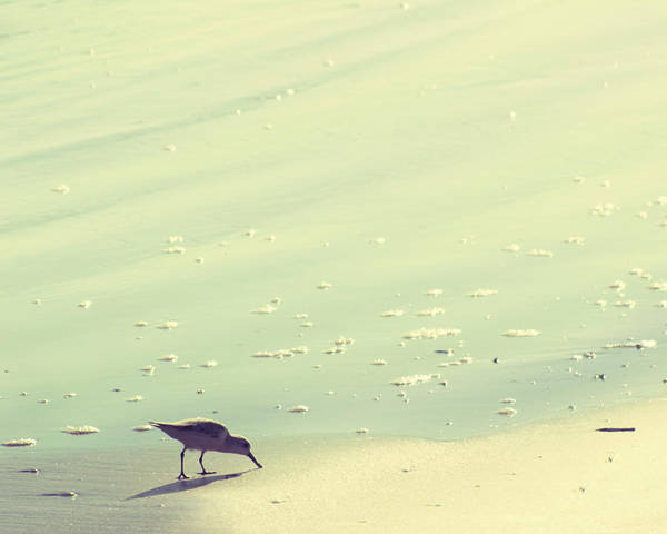 Wall Art - Photograph - The Sandpiper by Amy Tyler