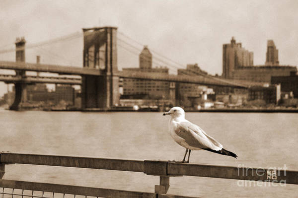 Photograph - The Seagull Of The Brooklyn Bridge Vintage Look by RicardMN Photography