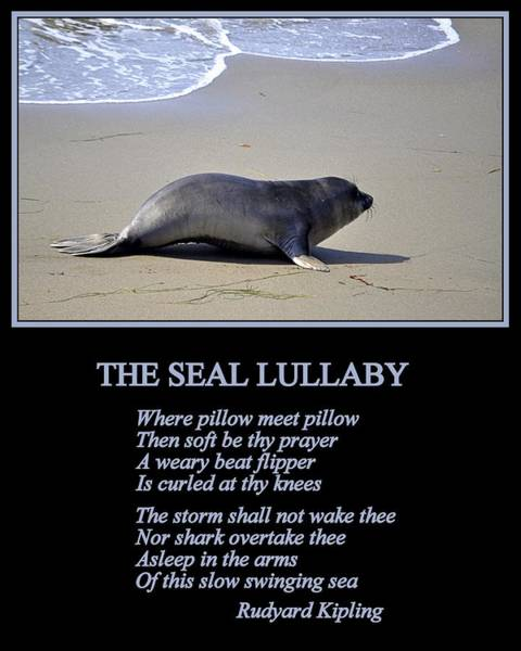 Photograph - The Seal Lullaby by AJ  Schibig