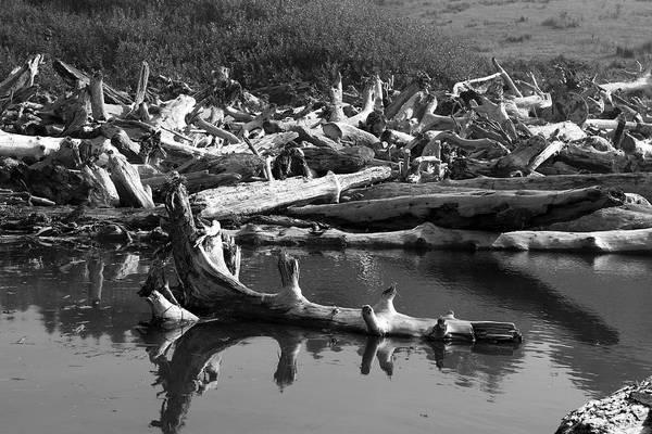 Photograph - The Shape Of Driftwood by Lorraine Devon Wilke
