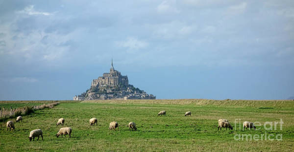 Photograph - The Sheep Of Mont Saint Michel by Olivier Le Queinec