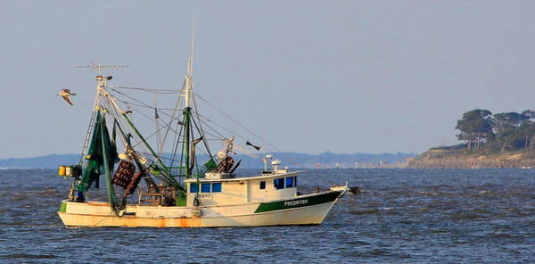 Photograph - The Shrimp Boat Predator Between St Simons And Jekyll Island by Reid Callaway