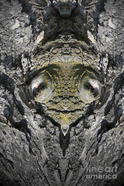 Wall Art - Photograph - The Silent Tree King by Heinz G Mielke