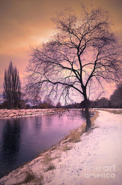 Photograph - The Snow And The Tree by Tara Turner