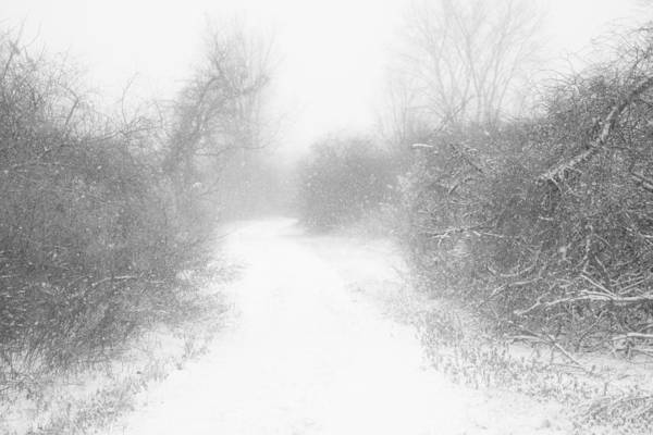 Photograph - The Snowy Winter Path by Gary Heller