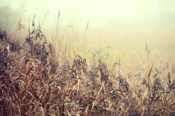 Photograph - The Song Of Autumnal Grass by Jenny Rainbow