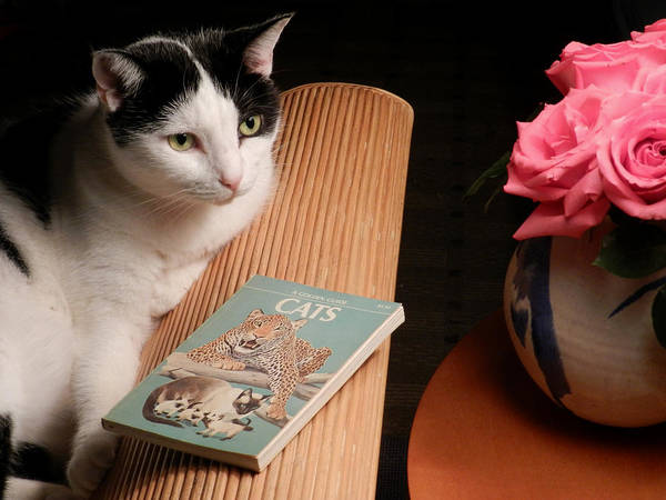 Photograph - The Sophisticated  Cat by Grace Dillon