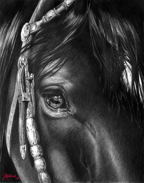 Painting - the Soul of a Horse by Jill Westbrook