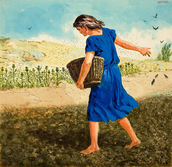Spreading Wall Art - Painting - The Sower Of The Seed by Clive Uptton