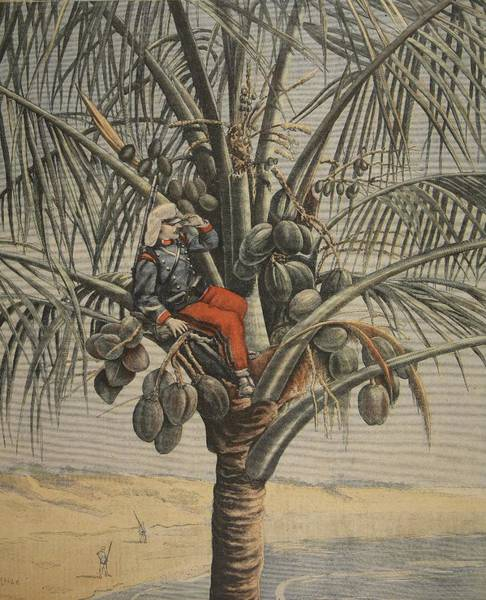 Tropical Drawing - The Spanish American War, Illustration by French School