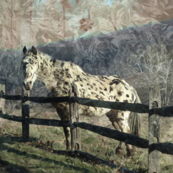 Photograph - The Speckled Horse by Trish Tritz