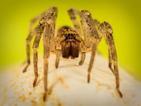 Dread Photograph - The Spider Series V by Marco Oliveira