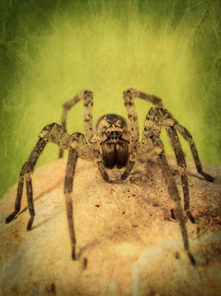 Ugly Photograph - The Spider Series X by Marco Oliveira