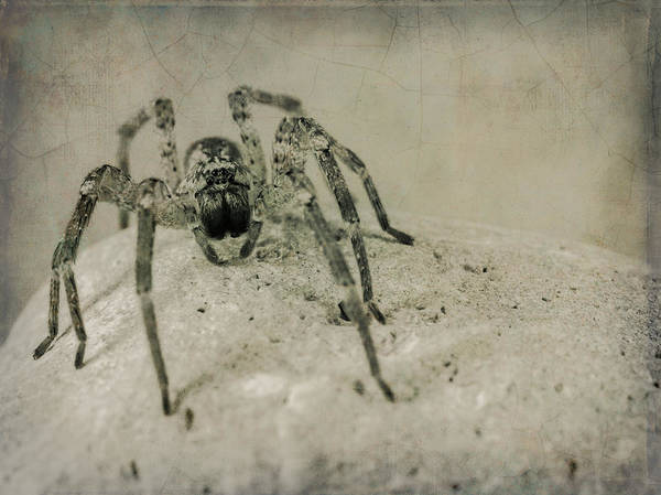 Spider Rock Photograph - The Spider Series Xi by Marco Oliveira