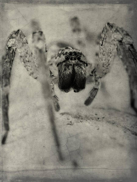 Spider Rock Photograph - The Spider Series Xii by Marco Oliveira