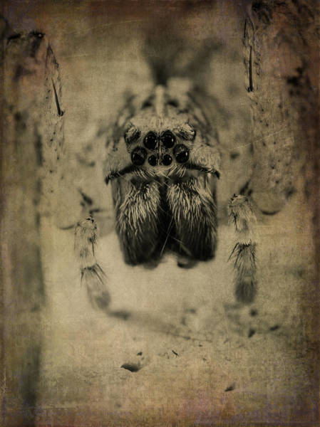 Ugly Photograph - The Spider Series Xiii by Marco Oliveira