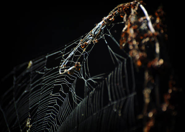Photograph - The Spider Web by Rebecca Sherman