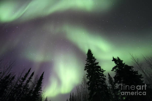 Yukon Territory Photograph - The Spirits Are Dancing by Priska Wettstein
