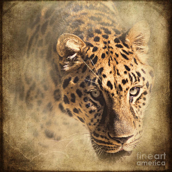 Photograph - The Spotted One by Pam  Holdsworth
