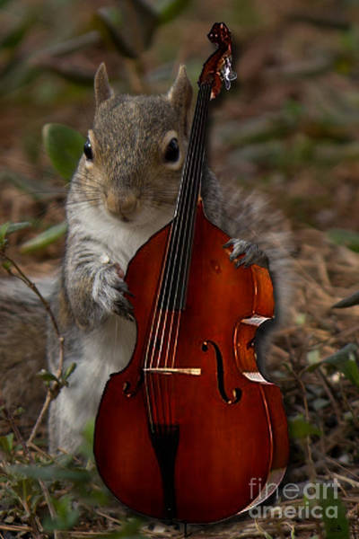 Wall Art - Photograph - The Squirrel And His Double Bass by Sandra Clark