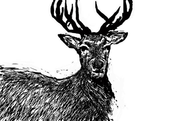 Digital Art - The Stag  by Paul Sutcliffe
