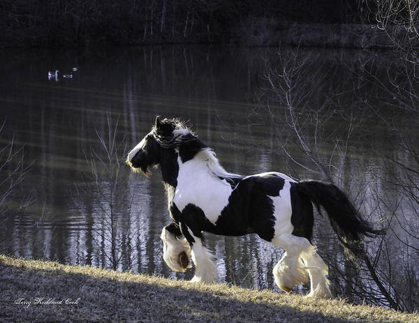 Photograph - The Stallion And The Lake by Terry Kirkland Cook