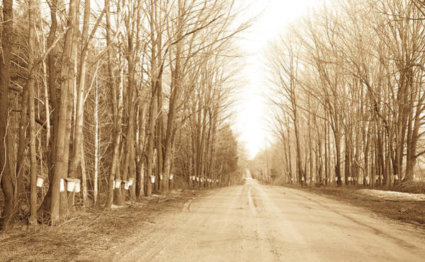 Photograph - The Starch Road by Nick Mares