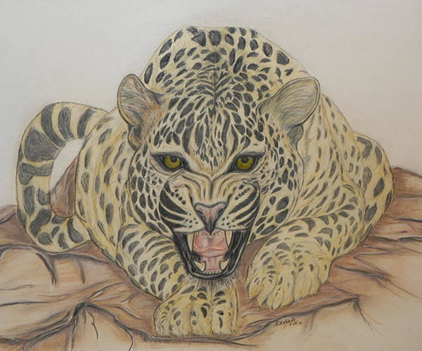 Pastel Pencil Drawing - The Stare by Cheryl McKeeth