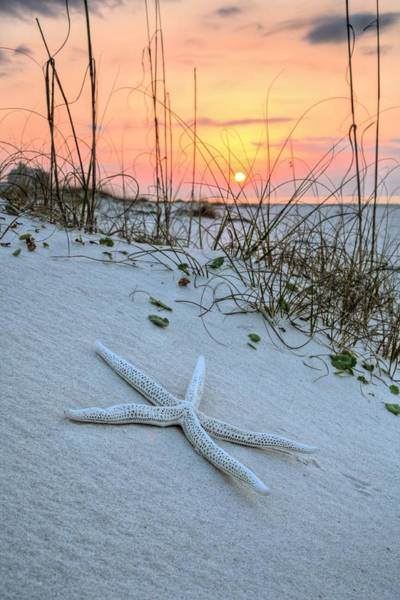 Photograph - The Starfish On Orange Beach by JC Findley