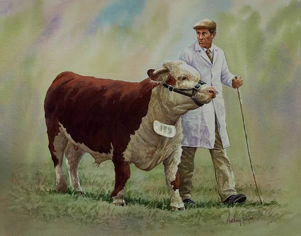Hereford Bull Painting - The Stockman And Bull by Anthony Forster