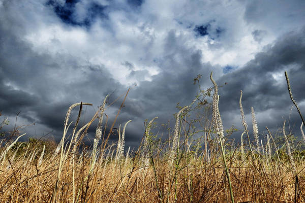 Wall Art - Photograph - The Storm Is Coming  by Ran Yehezkel