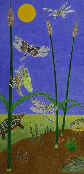 Painted Turtle Drawing - The Story Of The Dragonfly With Description by Gerald Strine