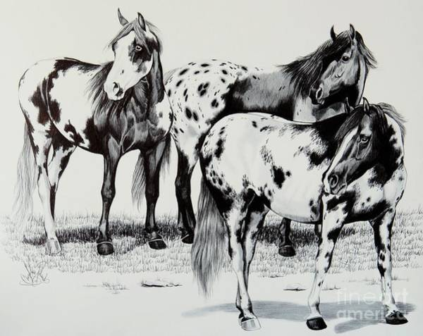 Appaloosa Drawing - The Strange Noise by Cheryl Poland
