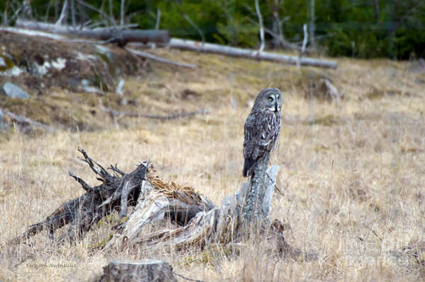 Photograph - The Stump by Torbjorn Swenelius