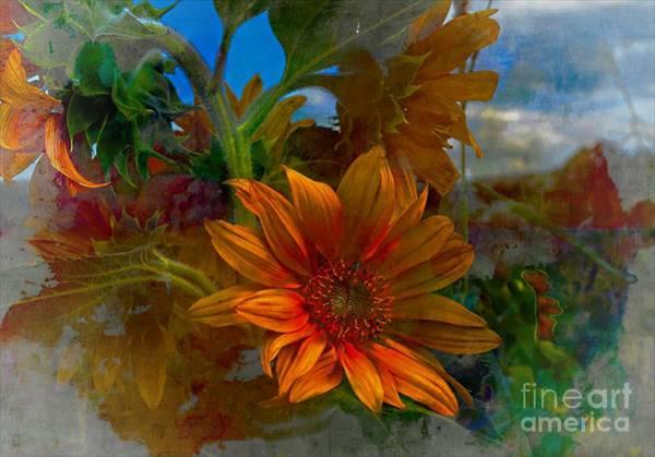 Photograph - The Sunflower by John  Kolenberg