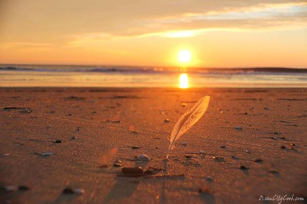 Photograph - The Sunrise Story by Robert Banach